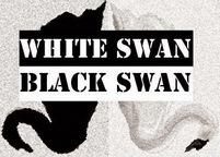 WhiteSwanBlackSwanSmall