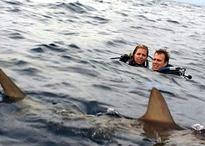 SharkTease